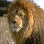 leon macho