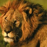 bello leon