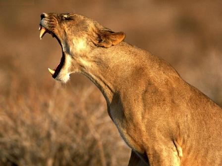 reina leona